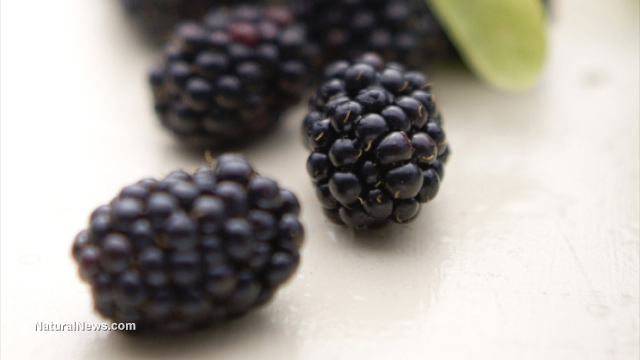 http://naturalnews.com/gallery/640/Food/Blackberry-Fruit.jpg
