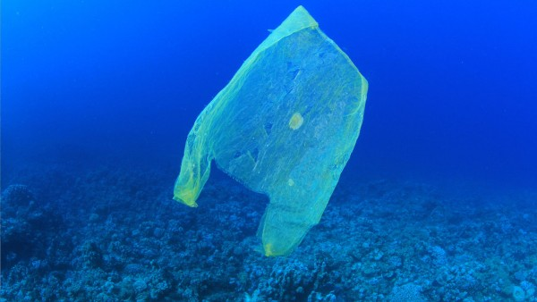 Image: Newly-evolved microbes may be consuming plastic waste in the ocean