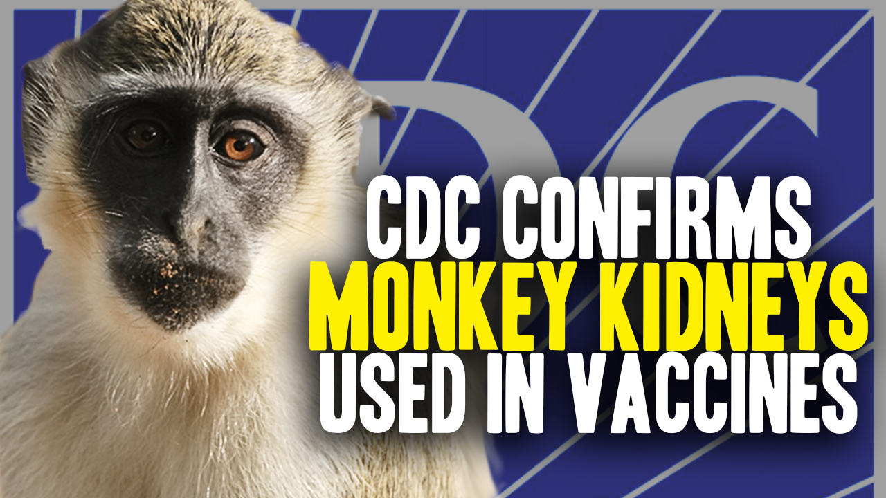 Image: How many African Green Monkeys are infected, euthanized and then organ harvested each year to make FDA-approved vaccines?