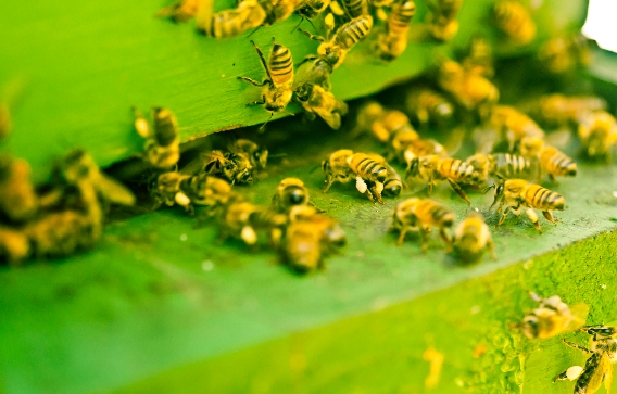 Image: 100% of honeybee colony food found to be heavily contaminated with toxic pesticides