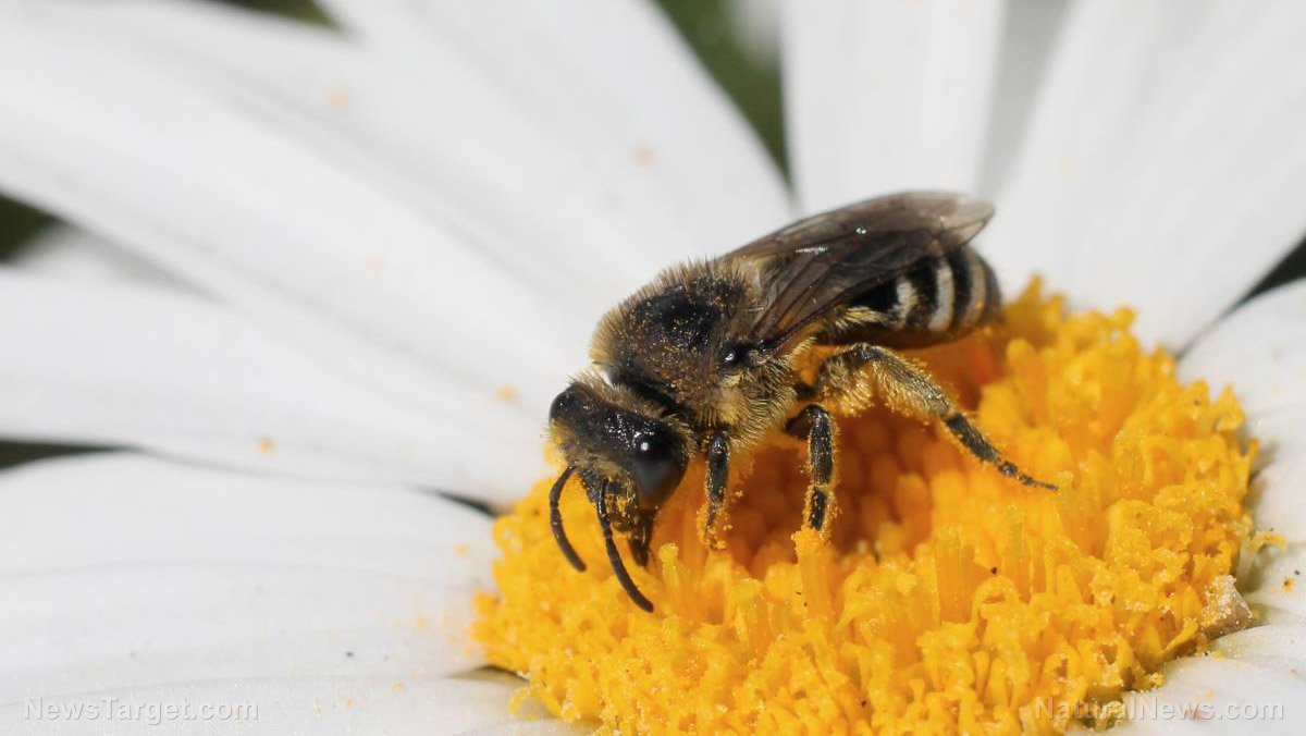 Image: Do your part and save the bees with these 10 easy-to-grow flowers
