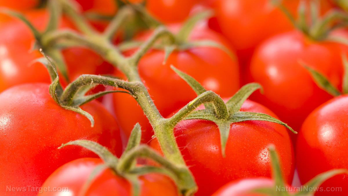 Image: Are these 8 common mistakes creating a tomato timebomb in your garden?