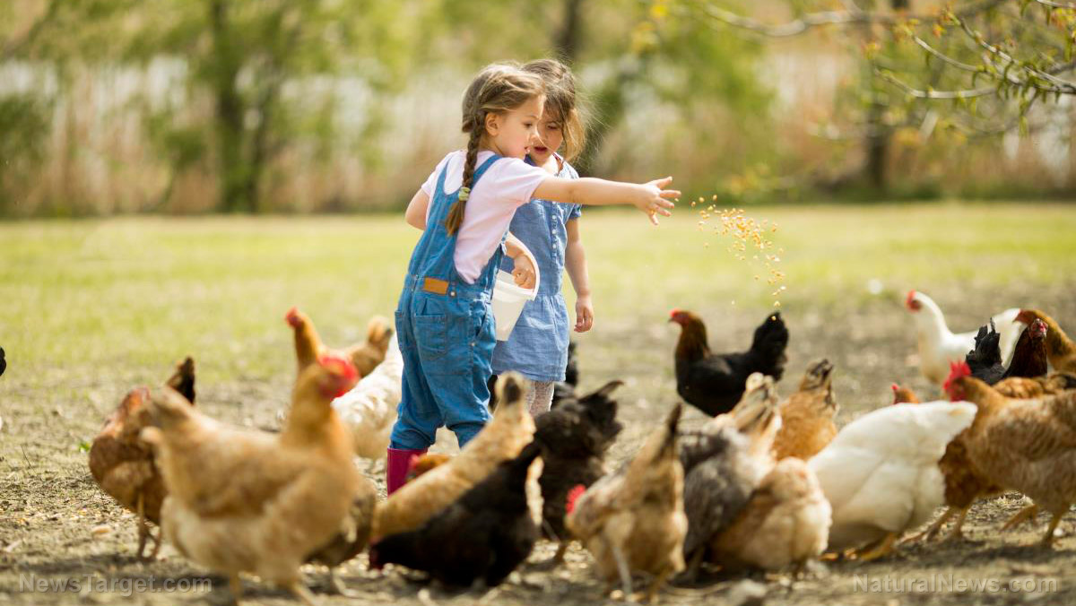"Image: No time for ""fowl"" play: 5 Strategies to protect your chickens from avian flu"