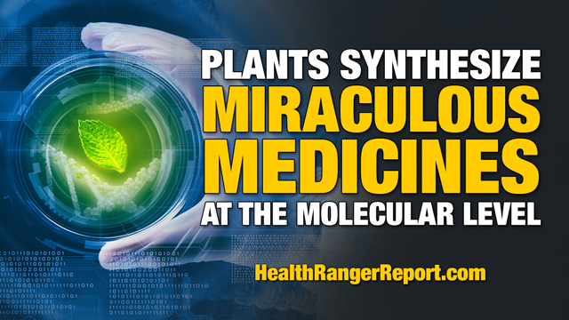 Image: Health Ranger: Plants synthesize miraculous medicines at the molecular level