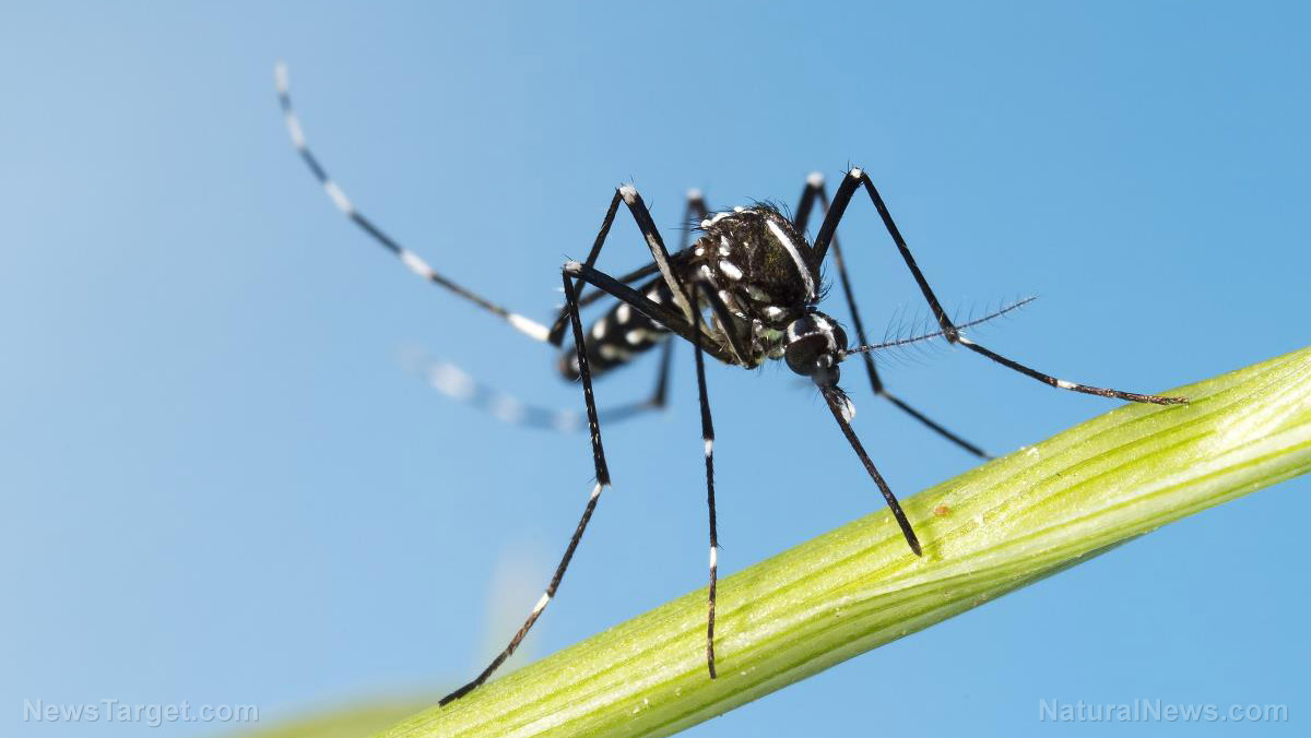 Image: Researchers discover a new, pesticide-free way to limit mosquitoes and reduce the spread of the West Nile virus