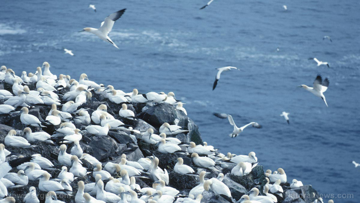 Image: Ocean pollution has covered the globe: Seabirds as far away as Alaska are being threatened by microplastics