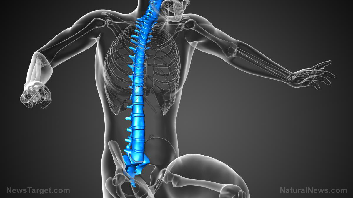 Image: U.S. Food and Drug Administration approves first ever 3D-printed spine implant to treat injuries