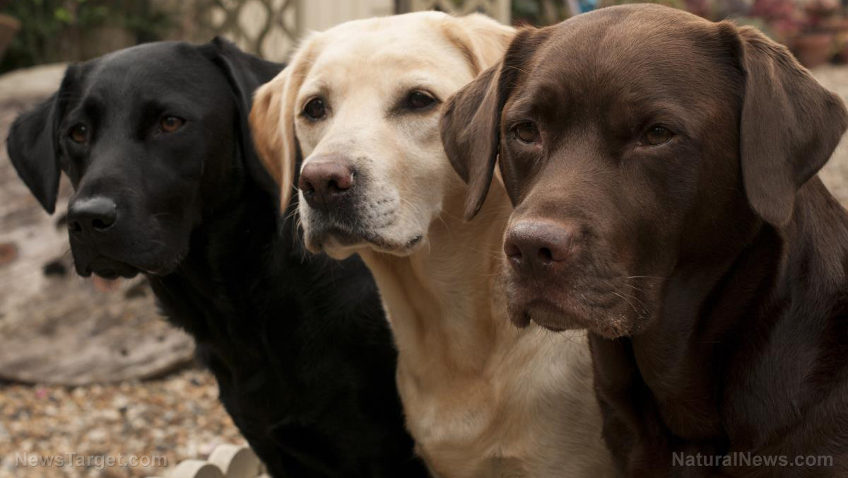 Image: Dogs proven to recognize themselves through precise sense of smell