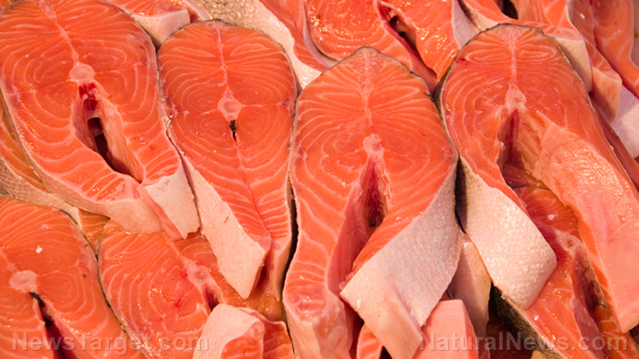 Image: Half of farmed salmon found to be DEAF due to toxic effects of confined aquaculture