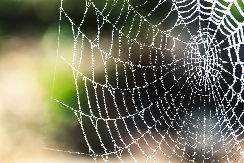 Image: Spider silk is so strong that researchers can use it to improve the performance of piezoelectric nanogenerators