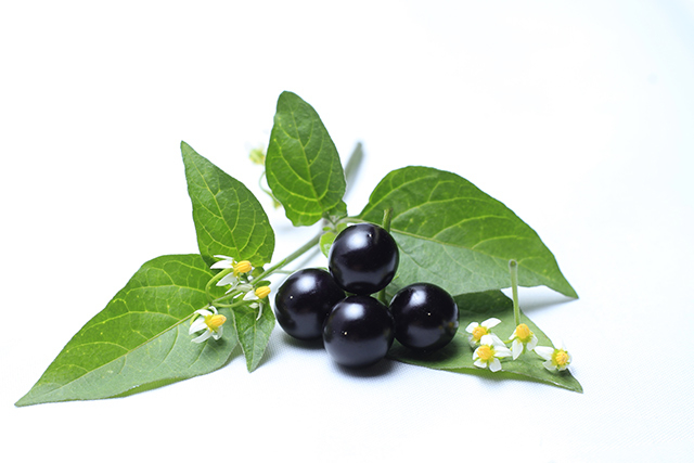 Image: Scientific analysis of the health benefits of digestive pills made from black nightshade