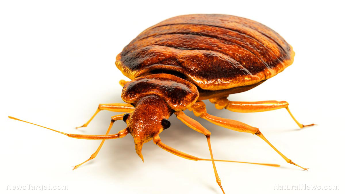 Image: What you need to know about bed bugs (and natural ways to get rid of them)