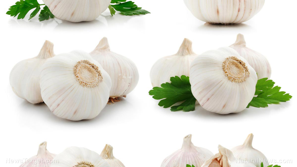 Image: Garlic and bitter kola found to be effective at treating respiratory infections