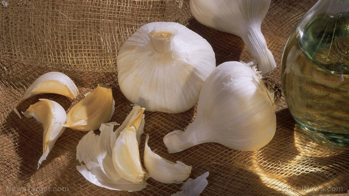 Image: Garlic extract proven to decrease cardiovascular risk in the obese