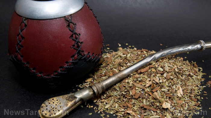 Image: Long-term consumption of yerba mate found to strengthen your digestive system