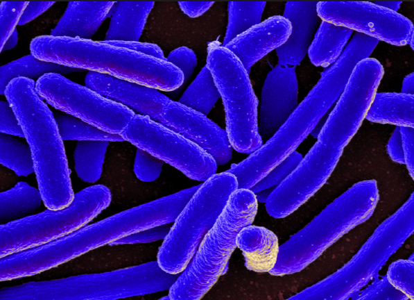 Image: New gut bacteria discovered: Scientists are researching a strain that shows potential for enhancing weight loss