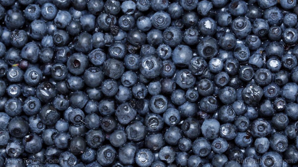 Image: Anthocyanin-rich blueberries improve gut health and reduce chronic inflammation