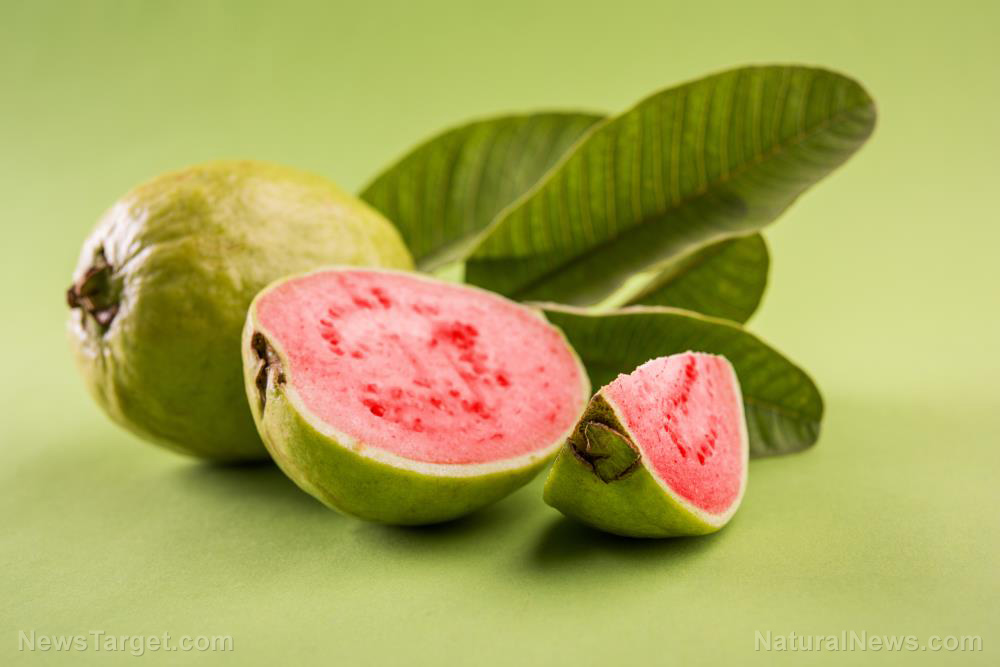 Image: Compounds found in guava observed to display potent anticancer activity
