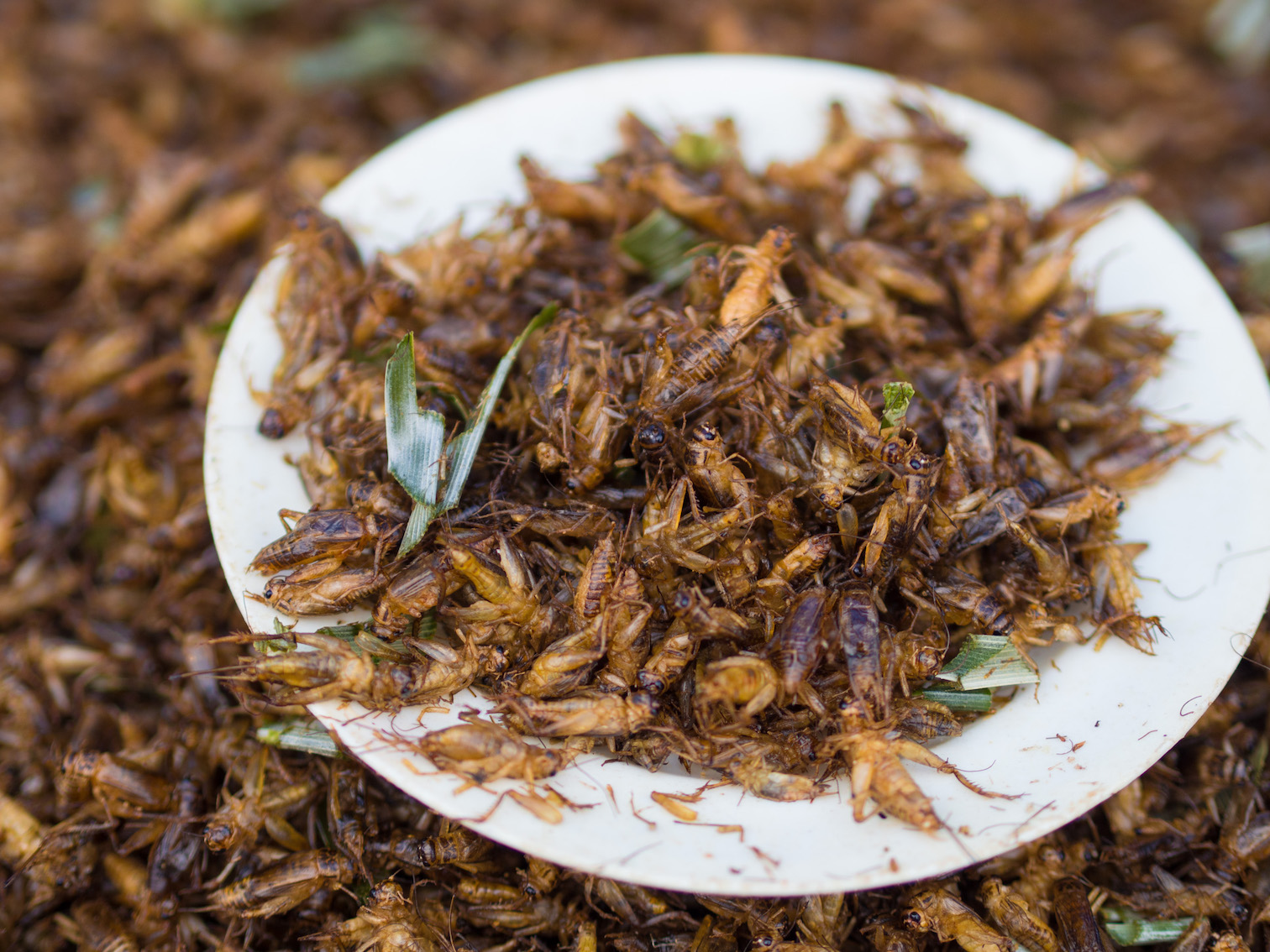 Image: Are insects the solution to solving world hunger?