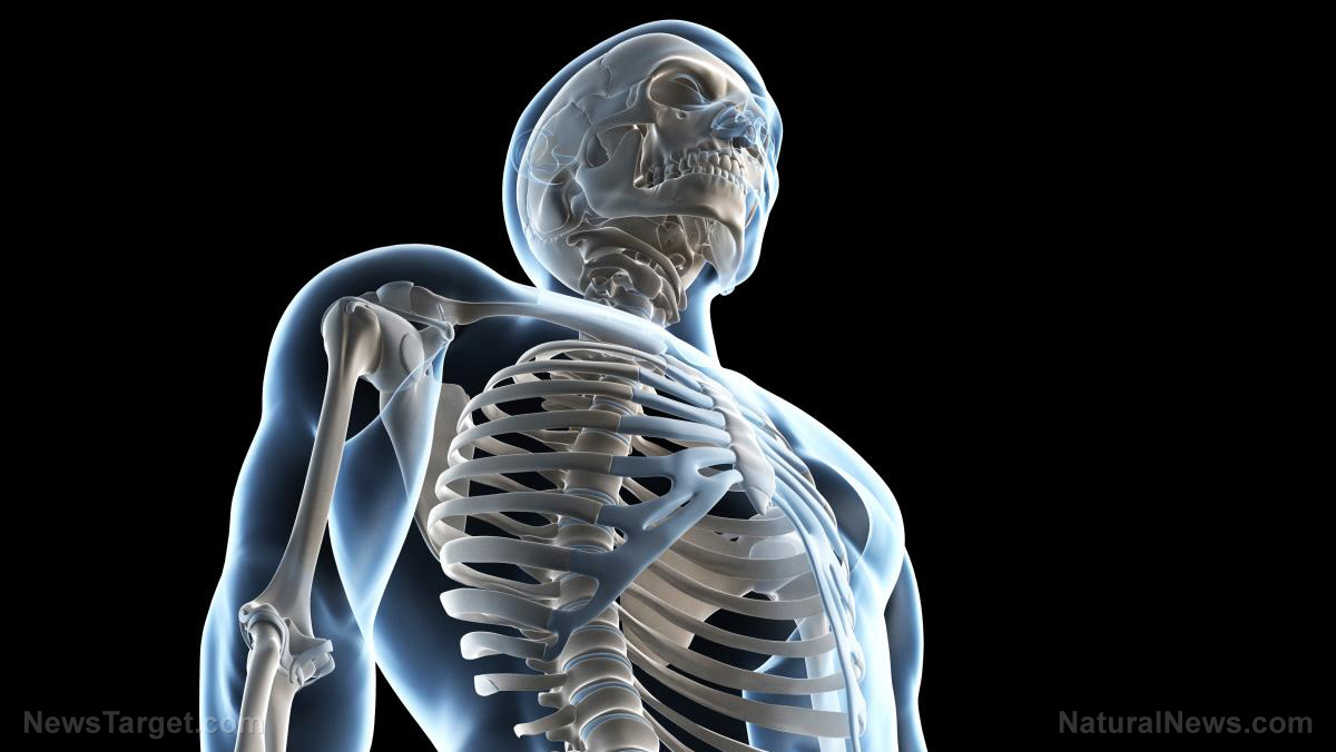 Image: Hungry to your bones? Scientists discover a hormone produced by our bones plays a key role in appetite and metabolism