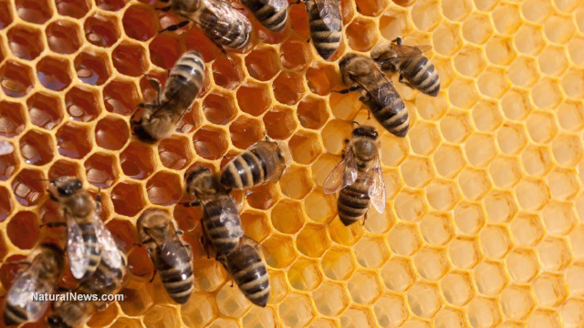Image: Neonicotinoid exposure makes bees less social, causing them to neglect their young… experts say this could stunt the growth of bee colonies
