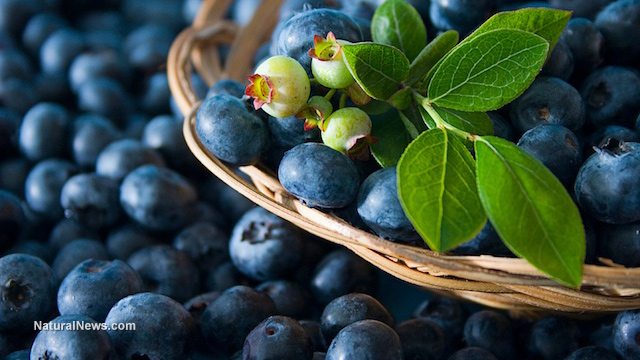 Image: 7 Reasons why you should start eating more blueberries