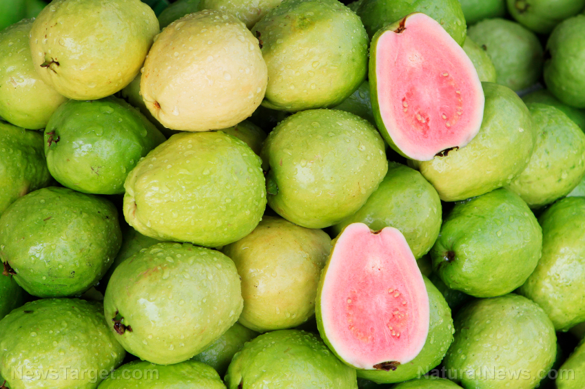 Image: Guava's nutritional and medicinal health benefits confirmed in another study, thanks to its antioxidant content