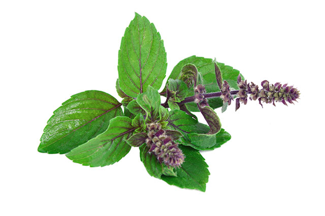 Image: Holy basil found to be an effective natural means toward more youthful skin