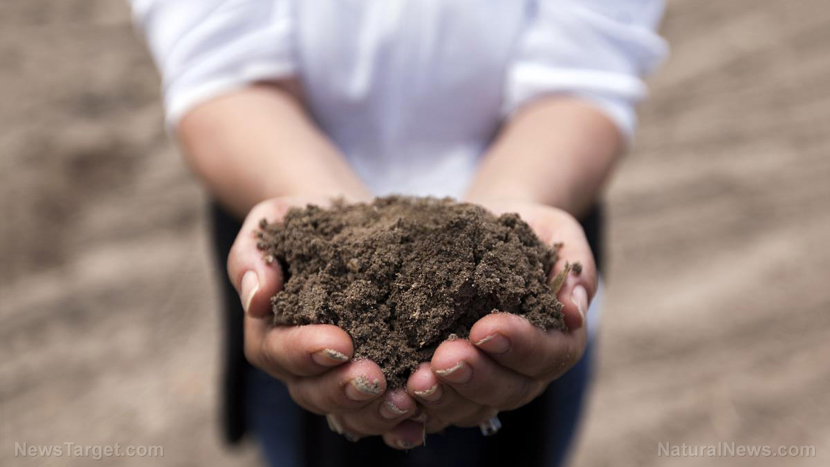 Image: Ancient soil amendments use agricultural waste to improve soil naturally