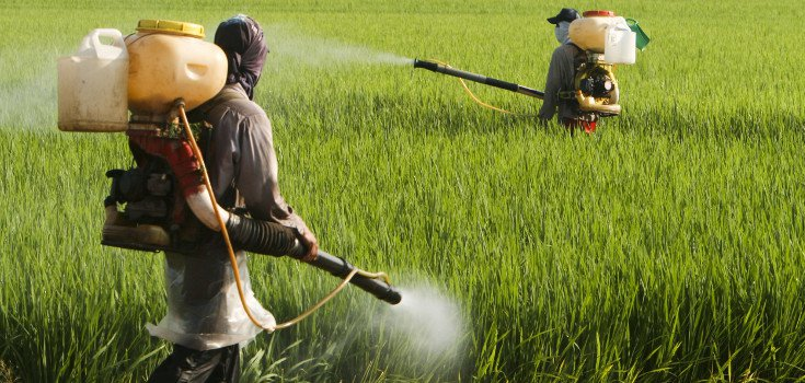 Image: Explosive new analysis reveals that farmers are spraying glyphosate on crops right before harvest