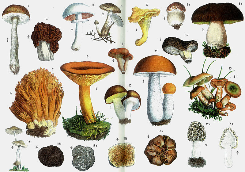 Image: Research concludes that over 10 types of mushrooms can boost brain function, helping prevent dementia