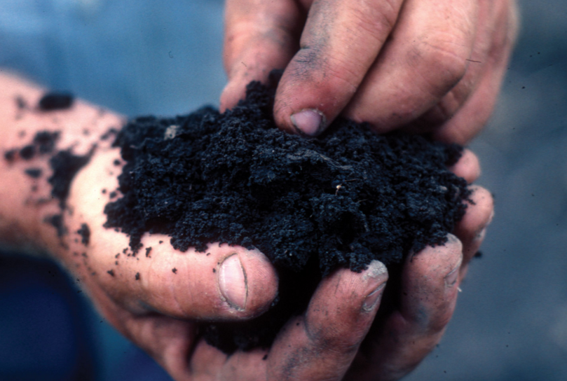 Image: Do soil nutrients impact nutrition? Study of how soil minerals affect nutrients