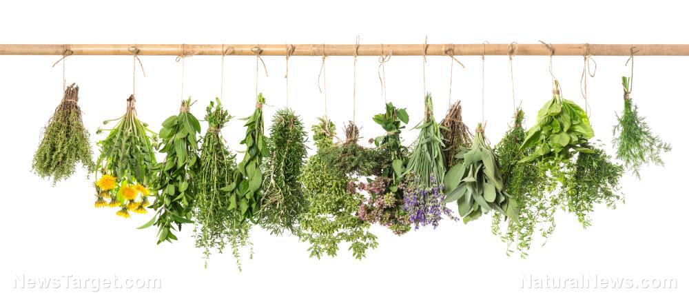 Image: 10 Medicinal herbs that every prepper needs when SHTF