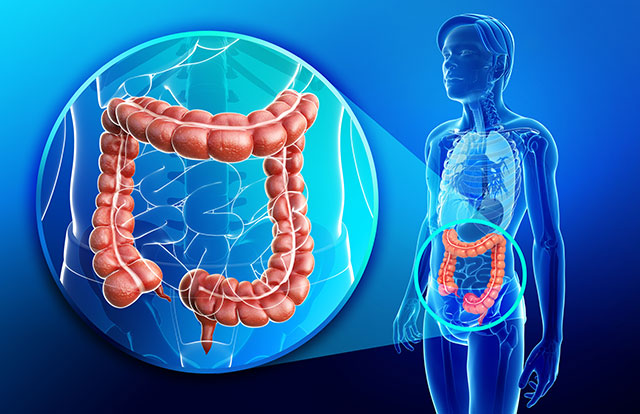 Image: Scientists have discovered that the appendix may have a huge role in preserving healthy gut bacteria