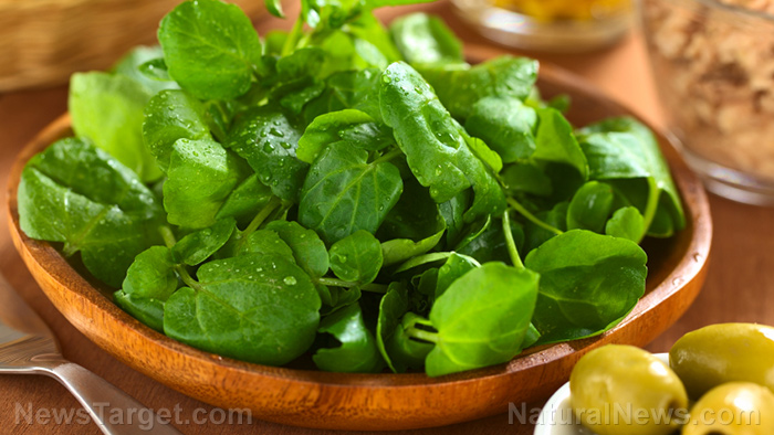 Image: Getting your leafy greens every day slows brain aging by a decade or more, scientists discover