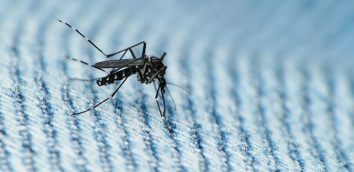 Image: After the rain – mosquitoes: Epidemics of mosquito-borne illness occur about three weeks after a major rain event
