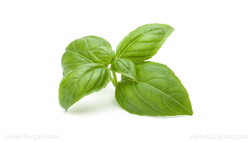 Image: Basil extract restores lipid metabolism, prevents oxidation