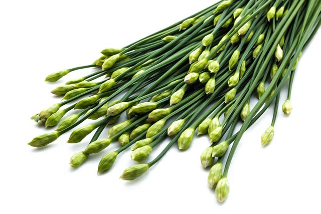 Image: Chronic renal failure can be alleviated using Chinese chives