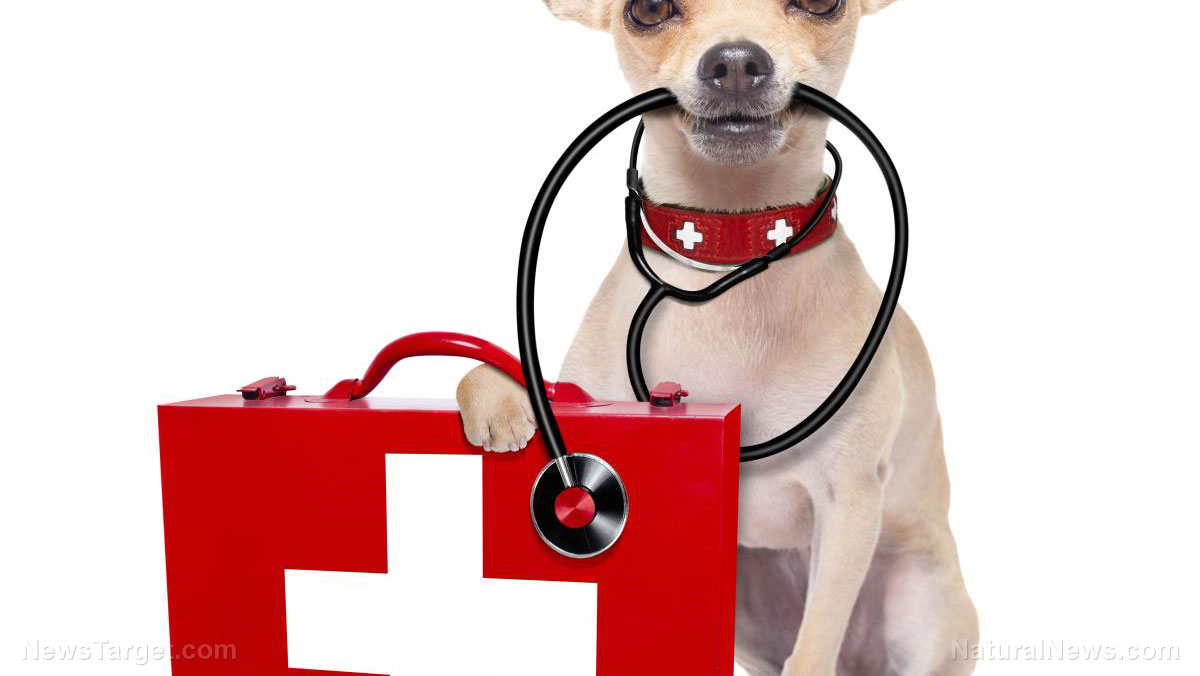 Image: Do you have a first aid kit for your pets?