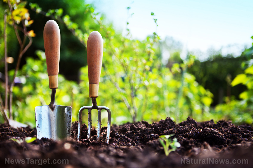 Image: Natural weed control: 9 Herbicide-free tricks
