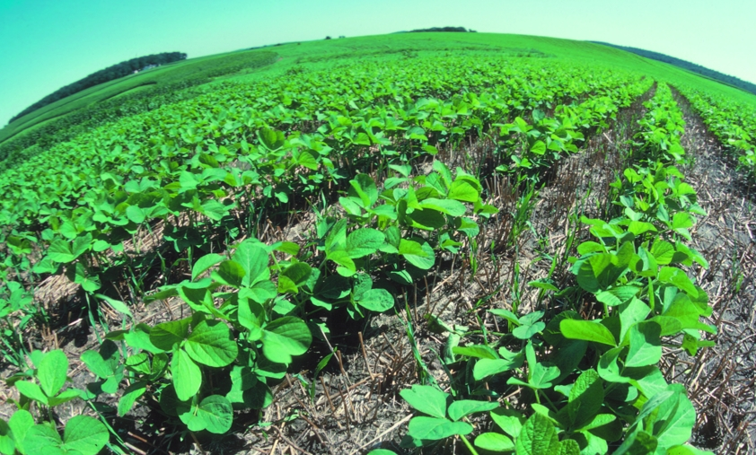 "Image: Long-term outlooks: Australian farmers eliminate herbicide-resistant ""superweeds"" using natural non-herbicidal methods"