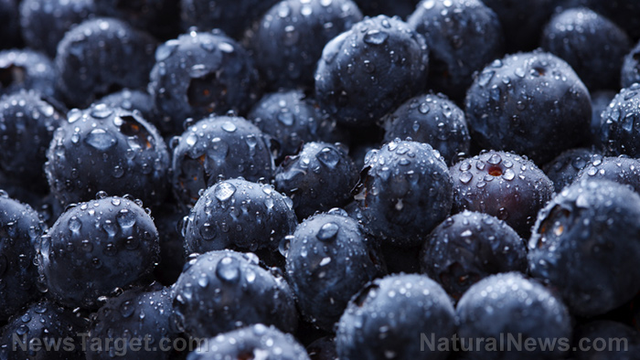 Image: Blueberries found to reduce CVD risk by up to 20 percent