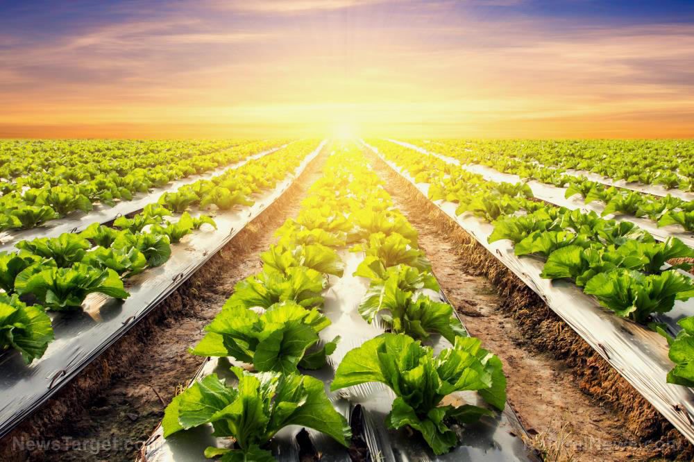 Image: Scientists study efficient photosynthetic bacteria to boost crop yields