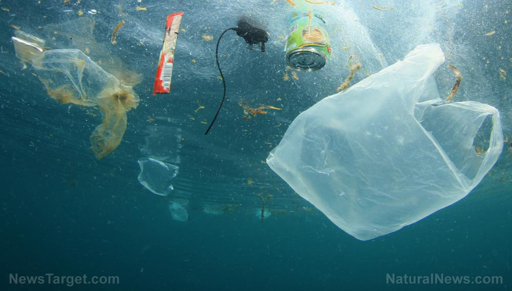 Image: Marine life in one of the most biodiverse waters in the Philippines not spared from horrors of plastic pollution