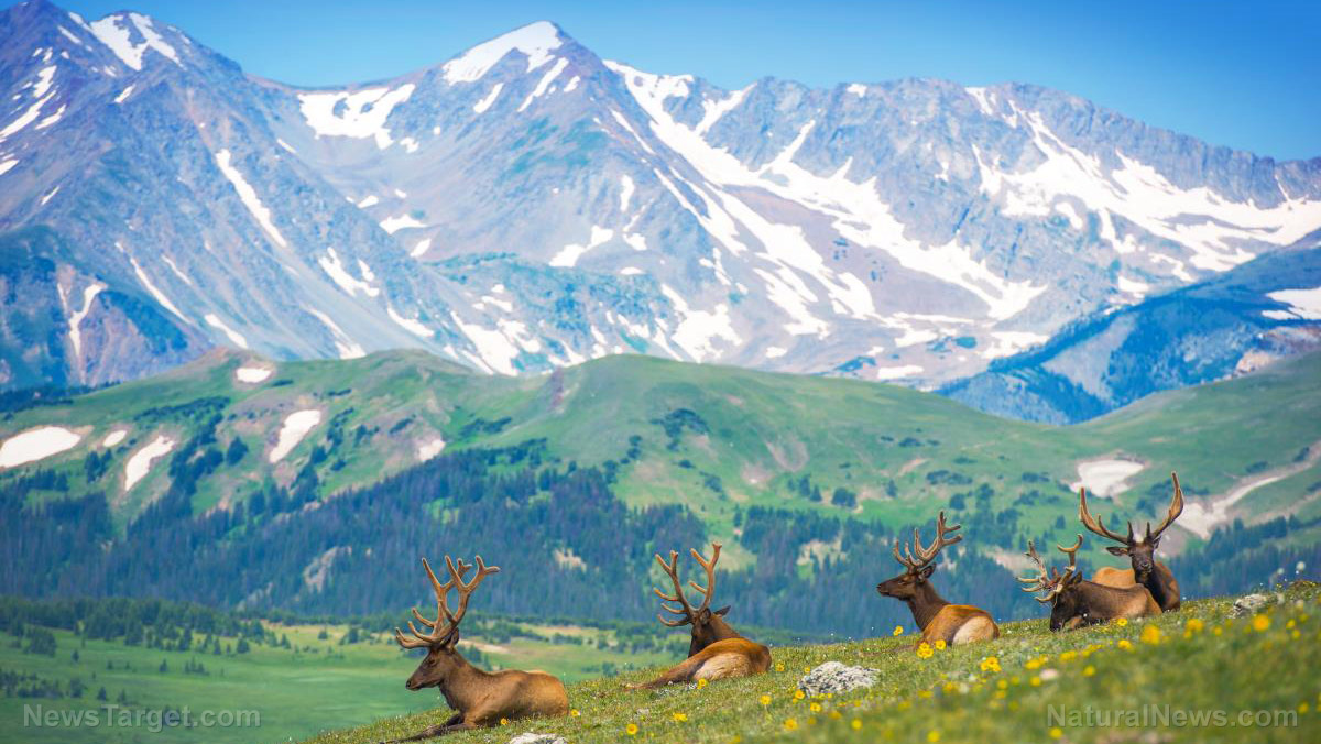 Image: Scientists turn to elk to help restore damaged strip-mined land