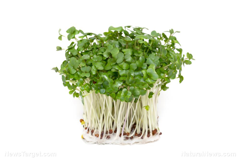 Image: Can you balance your brain chemistry with nutrition? Compounds in broccoli sprouts found to help people with schizophrenia