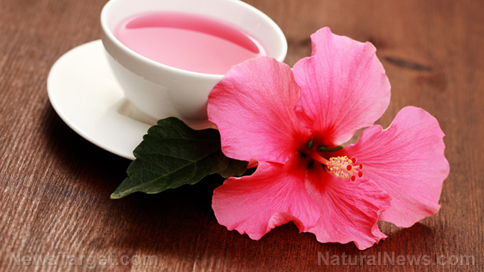"Image: Hibiscus flowers are a ""death sentence"" for breast cancer cells, says research"