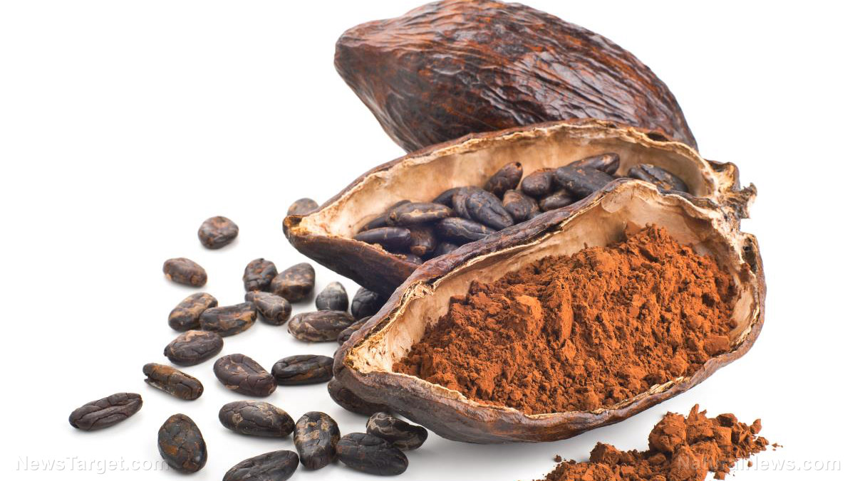 Image: Researchers find that cocoa flavonoids can help improve mobility and quality of life for the elderly