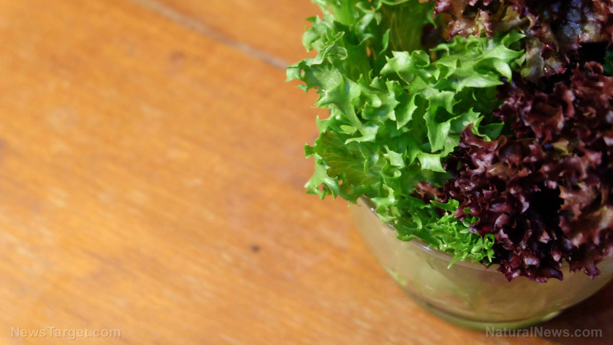 Image: Reasons to add nutritious red lettuce to your diet (plus a delicious smoothie recipe)