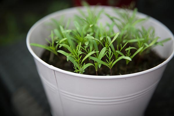 Image: Indoor gardening for beginners: How to start a garden amid the coronavirus lockdowns
